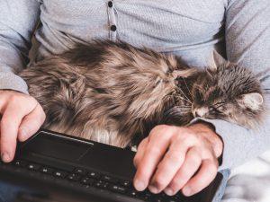 Generalnie notebookiLenovo ThinkPad L13 Gen 2 są coraz popularniejsze